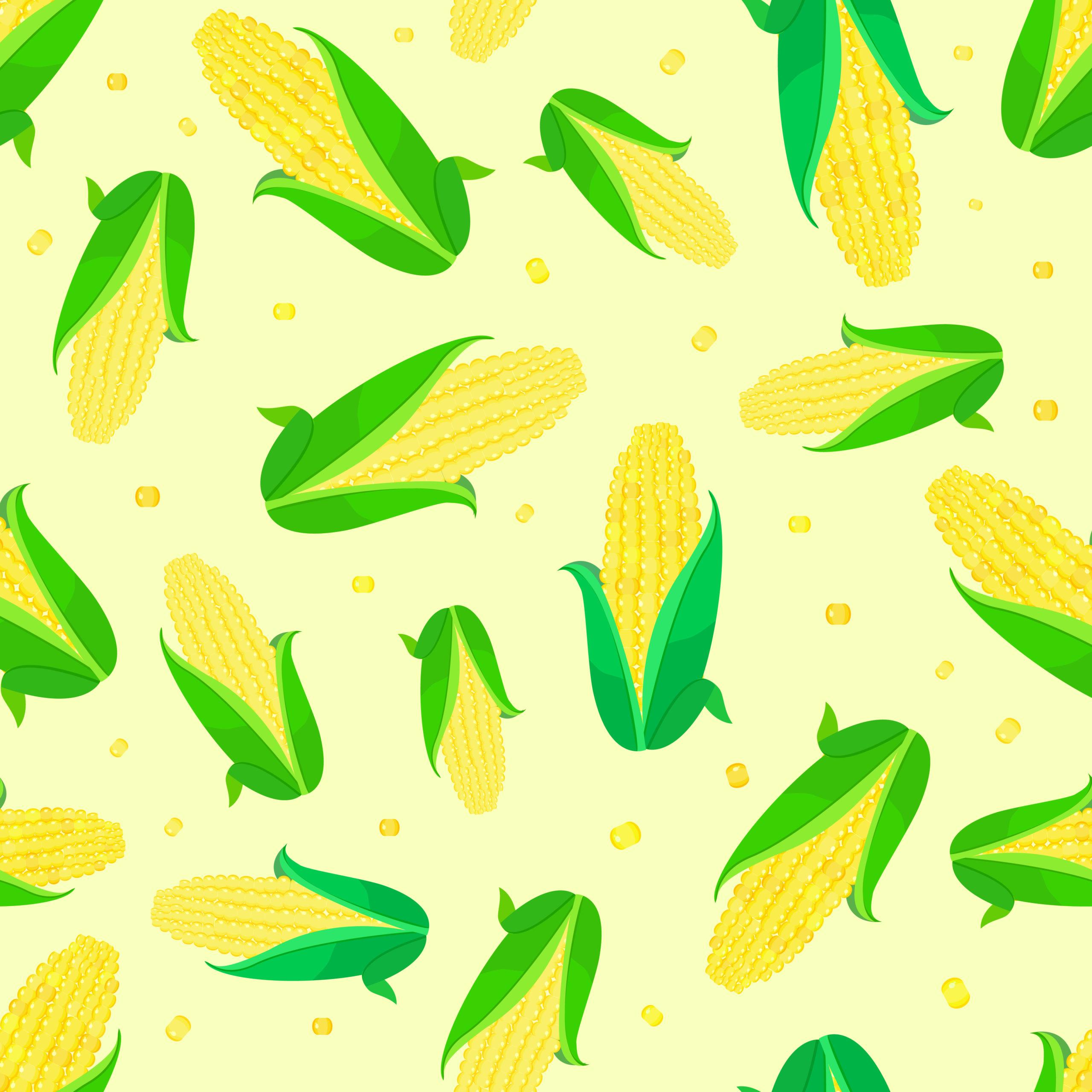 Oferta odmian kukurydzy 2021